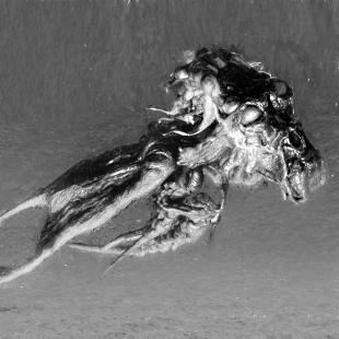 Swhuushirimi-Predatorius-Void-lon-iXaarii-v05